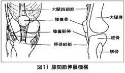 図1)股関節伸展機構